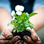 Να καλλιεργείς τον κήπο σου